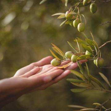 Olio novello in tavola : gusto e benessere per il nostro organismo
